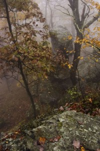Foggy afternoon on a north carolina mountain